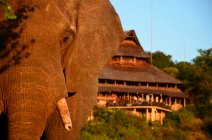 Vic Falls Safari Lodge Hotel Elephant