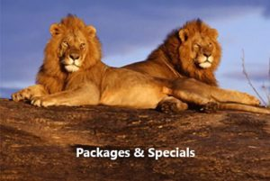 Victoria Falls Hotel Safari Lodge packages-specials