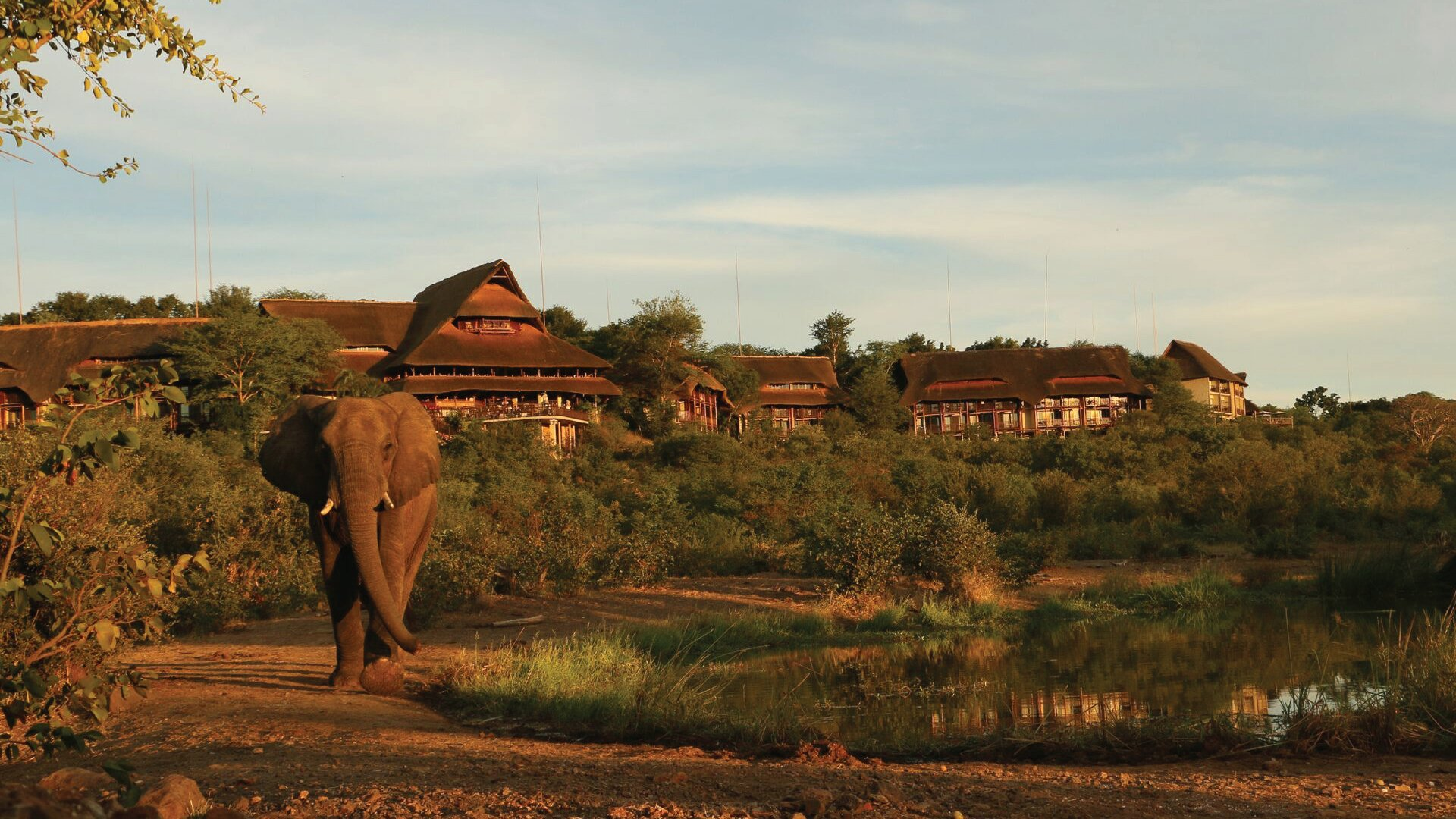 Victoria-Falls-Safari-Lodge-Hotel-Siduli-Hide